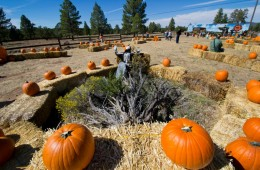 Grand Canyon Railway Pumpkin Patch Train. Photo courtesy Grand Canyon Railway & Hotel