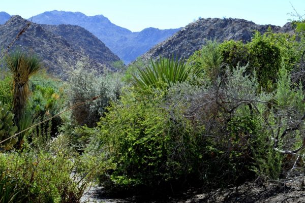 Desert outside Palm Springs. Photo by Susan Lanier-Graham