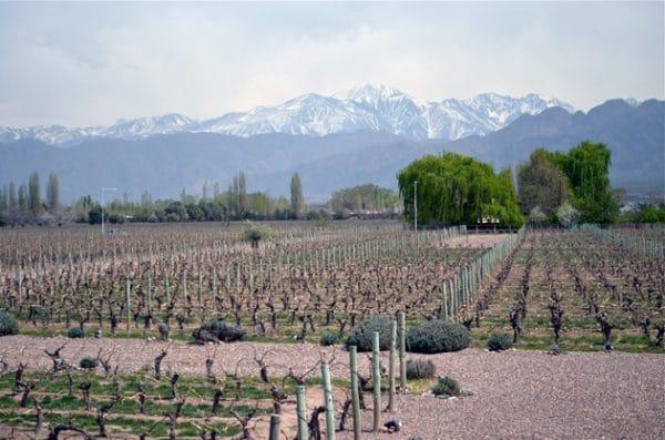 Mendoza Vineyard of Cheval des Andes in Early October - Remembering Mendoza