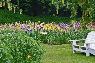Iris Bloom Season