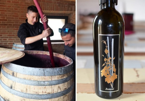 Punch Down at Podere Le Ripi and Bonsai Brunella