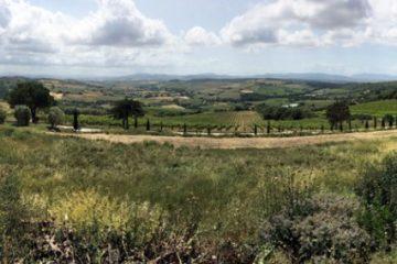 Maremma Vineyard View