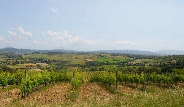 Maremma Vineyards
