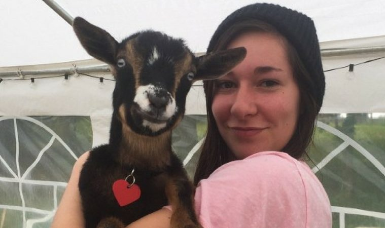 Goats travel several days a week from their home on a nearby farm to goat yoga classes held in Corvallis and Monmouth, Oregon.