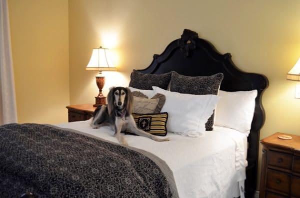 Chaumette Villa Bedroom with my Saluki, Zoe.