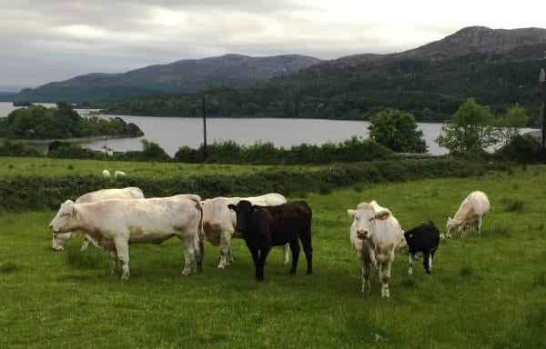 Lough Gill Yeats sligo - County Sligo Ireland