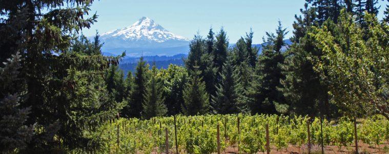 Columbia Gorge Wine Tasting