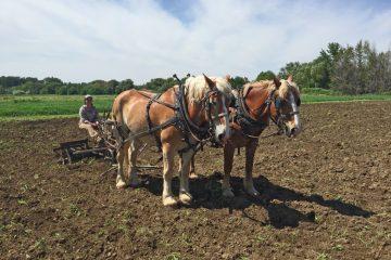 Hayshaker Farms - walla walla washington