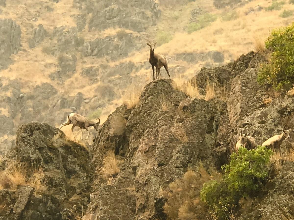 UnCruise Adventures Hells Canyon