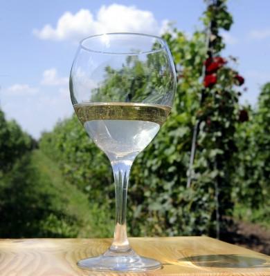 Wine glass in vineyard