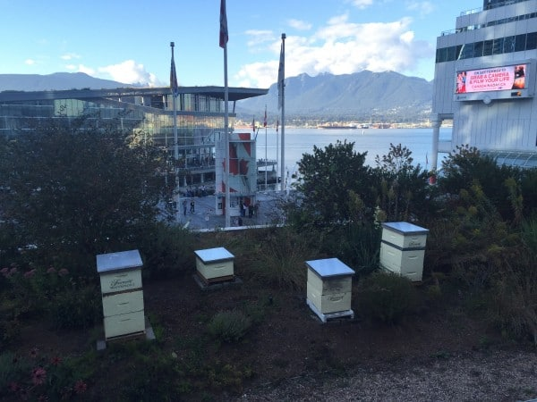 beehives Fairmont Waterfront Vancouver