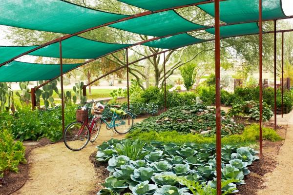 Organic gardens at JW Marriott Phoenix Desert Ridge. Photo by Rich Jones courtesy of JW Marriott Phoenix Desert Ridge Resort & Spa