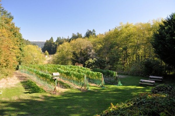 Guests can stroll through Olalla Wineries vineyards.
