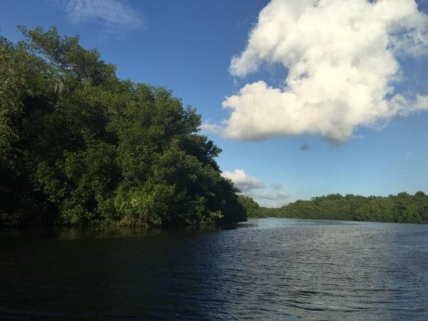 Caroni Swamp Trinidad