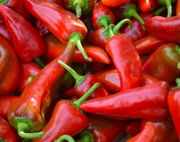 New Mexico chilis are beautiful and delicious in either red or green. Photo by Susan Lanier-Graham