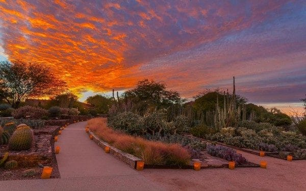 Las Noches de las Luminarias. Photo by Adam Rodriguez for Desert Botanical Garden