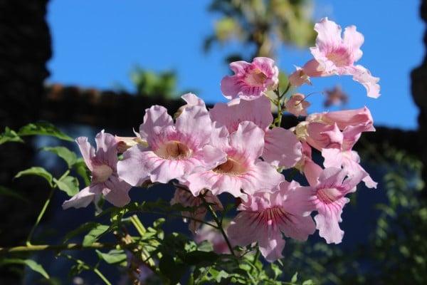 El Encanto Gardens