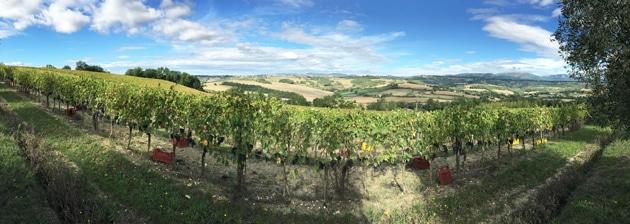 Roccafiore Vineyards