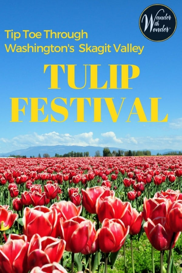 Every April, fields of colorful tulips dazzle the eyes at the Skagit Valley Tulip Festival against the Cascade Mountains in Washington State.