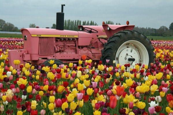 Oregon Wooden Shoe Tulip Fest
