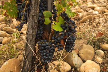 Chateauneuf du Pappe