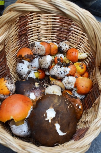 Montalcino Mushrooms