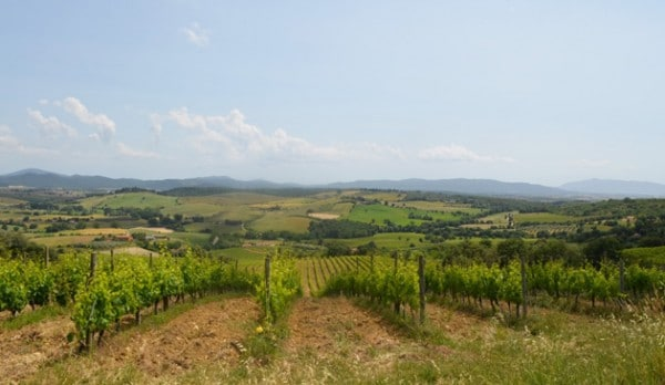 Maremma Vineyards