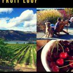 Oregon fruit loop
