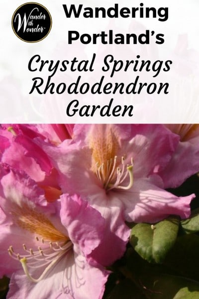 Tucked into the historic Eastmoreland neighborhood of Portland, Oregon, you'll find Crystal Springs Rhododendron Garden, a retreat with one of the world's finest collection of rhododendrons and azaleas.