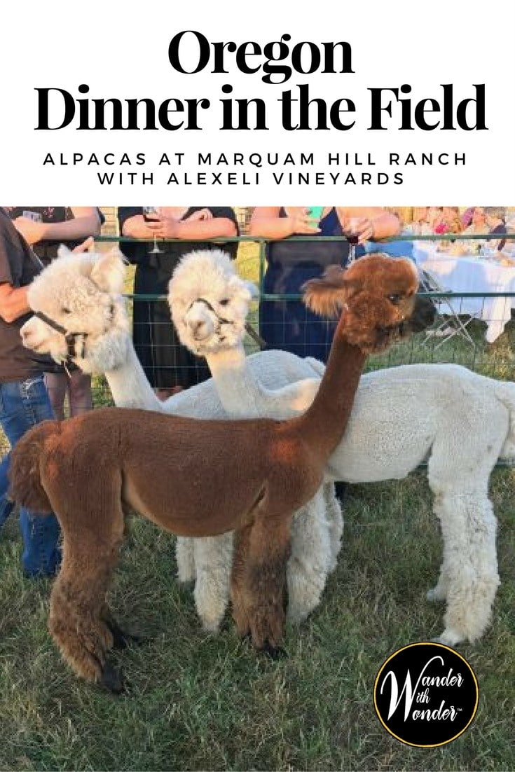 Dinner in the Field events, which are held throughout northwest Oregon, are something to look forward to all year this time we kept company with alpacas!