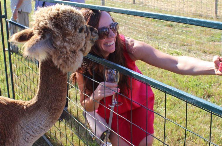 Alpaca Selfie