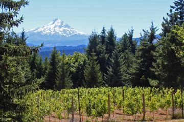 Columbia Gorge Wine Tasting