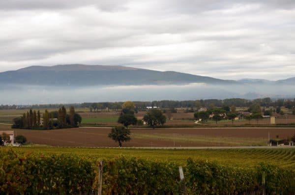 ColSanto in Montefaclco - Livon