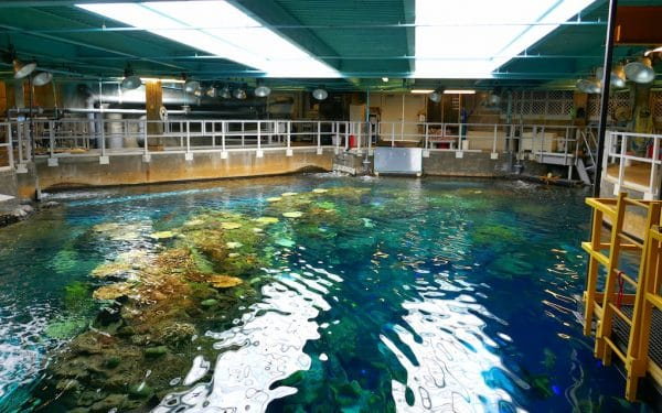 Behind the scenes at Aquarium of the Pacific. Photo by Susan Lanier-Graham