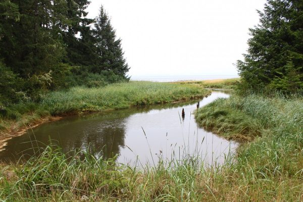Willapa Bay near Charles Nelson Guest House