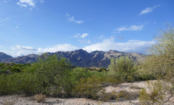 Looking out over the Santa Catalina Mountains in Tucson from the trail ride at Hacienda Del Sol. Photo by Susan Lanier-Graham