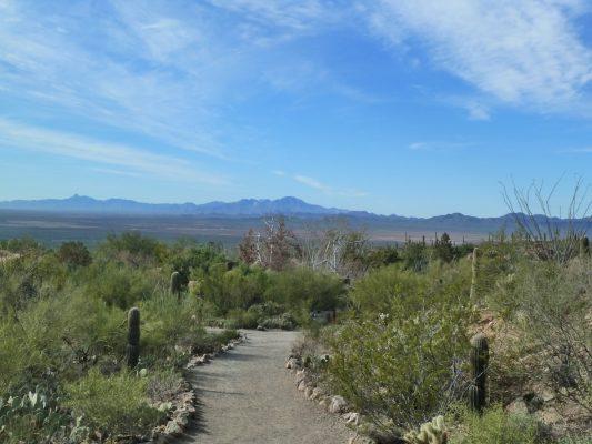 Arizona-Sonora Desert Museum in Tucson. Credit: Susan Lanier-Graham