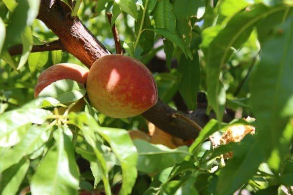 Fresh Foodie Trail - Agritopia