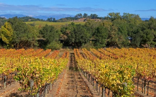 wine country gifts