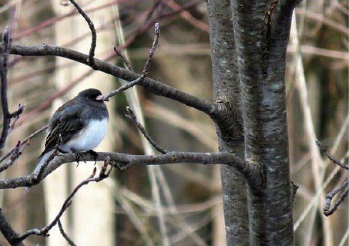 Snowbird in Texas