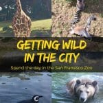 Explore the San Francisco Zoo tucked along the western edge of San Francisco on Ocean Beach