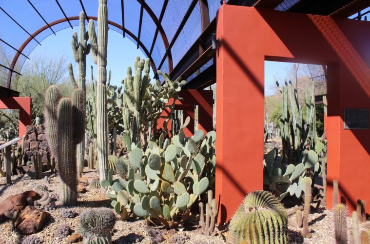wandering the phoenix desert botanical garden - Desert Botanical Garden
