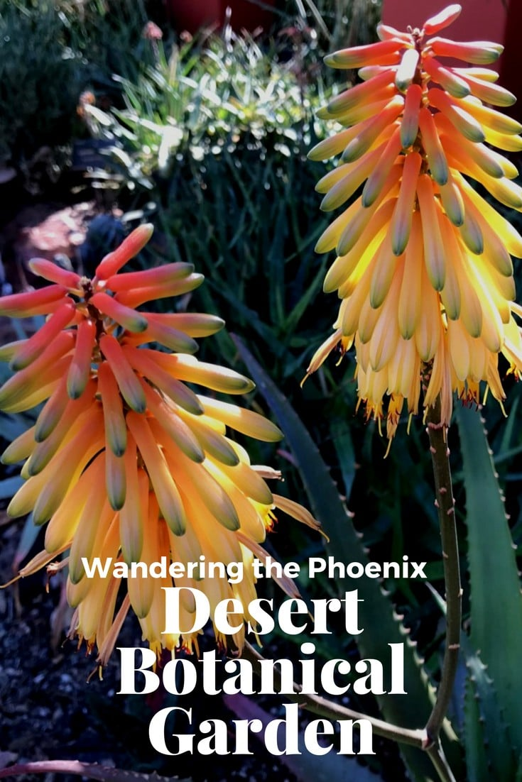 When you visit the Phoenix Arizona area, a trip to the Desert Botanical Garden must be on your list of things to do. There are 5 themed trails to wander and signature events throughout the year to attend. #wanderarizona #desertbotanicalgardens #wanderwithwonder