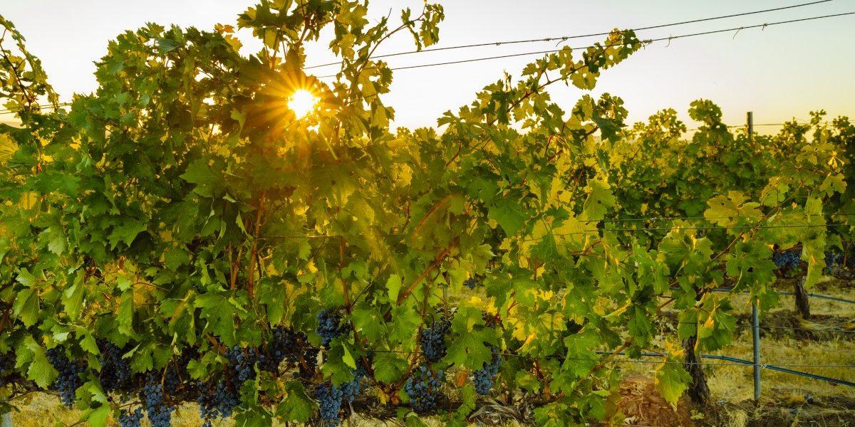 The Walla Walla Valley AVA was established in 1984. Photo courtesy Walla Walla Valley Wine Alliance