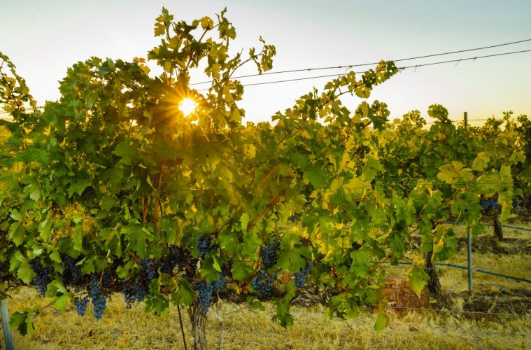 The Walla Walla Valley AVA was established in 1984. Photo courtesy Walla Walla Valley Wine Alliance