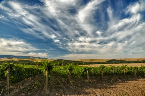 Explore the Walla Walla Valley with custom itineraries from the Walla Walla Valley Wine Alliance.