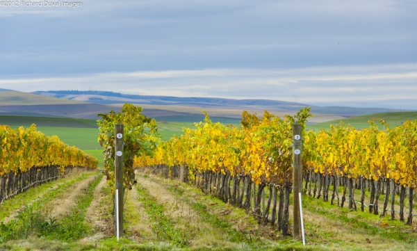 Walla Walla Valley vineyards. Photo courtesy Walla Walla Valley Wine Alliance