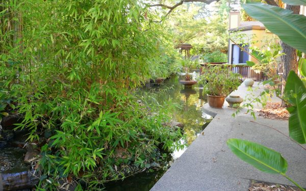 Palo Alto - Silicon Valley - San Mateo - Koi ponds and exotic plants at Dinah's Garden Hotel. Photo by Susan Lanier-Graham