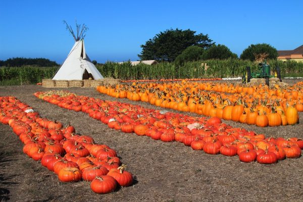 San Mateo - Silicon Valley - Half Moon Bay - Farmer John's Pumpkins. Photo by Edna Takeda-Geller