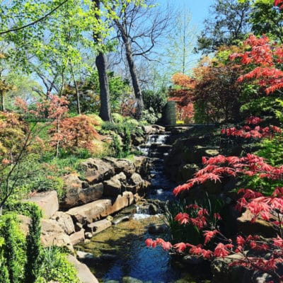 best gardens in North America -With 80 varieties of Japanese maples, walk through the Maple Garden at the Dallas Arboretum. Photo Credit: Catherine Parker